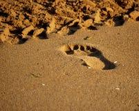 Huella en la arena Imagen de archivo