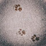 Huella retra del gato del vintage del Oldie en nieve foto de archivo