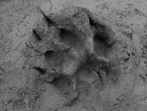 Huella verdadera del gato Imagenes de archivo