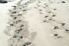 Huellas animales en la arena imágenes de archivo libres de regalías