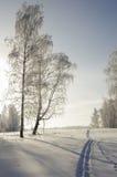 Huellas de los esquís en el bosque del invierno en un día soleado escarchado Imagenes de archivo