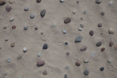 Huellas de los guijarros, de la arena y del pájaro Imagen de archivo