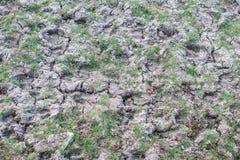 Huellas del búfalo en la tierra fangosa seca Foto de archivo libre de regalías