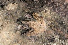 Huellas del dinosaurio imagen de archivo libre de regalías