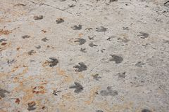 Huellas del dinosaurio trackway foto de archivo libre de regalías