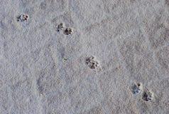 Huellas del gato en una nieve blanca imagenes de archivo