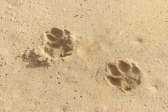 Huellas del perro en arena Foto de archivo libre de regalías