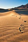 Huellas en dunas de arena Imágenes de archivo libres de regalías