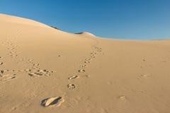 Huellas en dunas de arena Fotografía de archivo libre de regalías