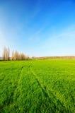 Huellas en el campo del trigo verde en la distancia Imágenes de archivo libres de regalías