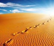 Huellas en la duna de arena Fotos de archivo libres de regalías