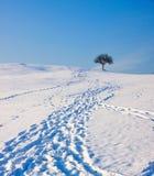 Huellas en la nieve que lleva al árbol Fotografía de archivo