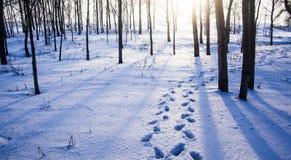 Huellas en nieve Imagenes de archivo