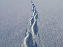 Huellas en nieve del terciopelo en un día soleado, escarchado de enero foto de archivo libre de regalías