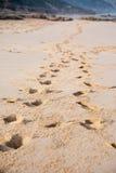 Huellas en una playa Imagenes de archivo