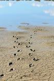 Huellas humanas en el fango Fotografía de archivo libre de regalías