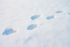 Huellas humanas profundas en nieve Fotografía de archivo libre de regalías