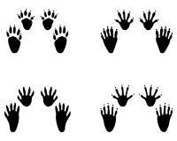 Huellas negras del mapache fotografía de archivo libre de regalías