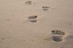 Huellas solitarias en arena Fotos de archivo libres de regalías