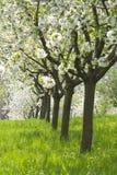 Huerta - árboles del resorte Imágenes de archivo libres de regalías