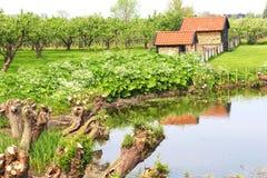 Huerta con los árboles frutales, Países Bajos Foto de archivo