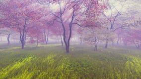Huerta de cereza en la plena floración ilustración del vector