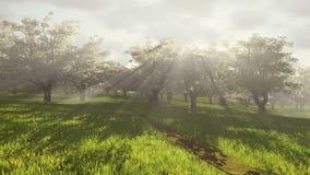 Huerta de cereza floreciente en la luz del sol Lapso de tiempo libre illustration