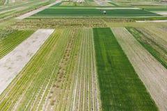 Huerta de fruta, huertas polacas, foto aérea Imágenes de archivo libres de regalías