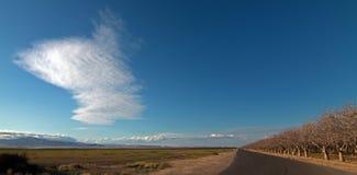 Huerta de la almendra debajo de las nubes lenticulares en California central cerca de Bakersfield California Foto de archivo libre de regalías