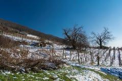 Huerta en la colina Imagenes de archivo