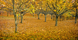 Huerta en otoño imagenes de archivo