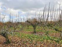 Huerta en otoño Foto de archivo libre de regalías