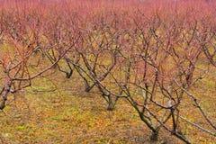 Huerta Macedonia del oeste, Grecia del otoño Fotografía de archivo