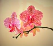 Huerta preciosa Fotos de archivo libres de regalías