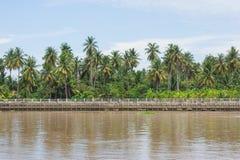 Huerta verde de los árboles de coco a lo largo del lado con la calzada y el río concretos imagen de archivo