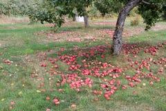 Huertas en Quebec en otoño Imagenes de archivo