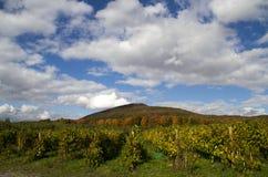 Huertas en Quebec en otoño Fotografía de archivo