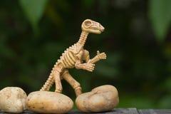 Hueso de dinosaurio en cierre encima del estilo Fotos de archivo