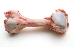 Hueso de la carne de vaca Imagen de archivo libre de regalías