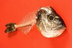 Hueso de pescados Imágenes de archivo libres de regalías