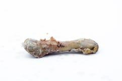 Hueso del pollo Imagenes de archivo