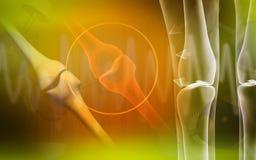 Hueso humano de la pierna Imagen de archivo