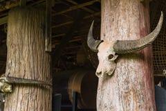hueso principal de los cráneos grandes blancos del búfalo con los cuernos instalados en polo de la casa de campo como elementos d fotos de archivo libres de regalías