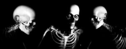 Huesos 105 del ser humano Fotografía de archivo libre de regalías