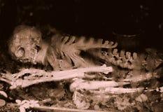 Huesos imagen de archivo libre de regalías