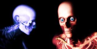 Huesos 79 del ser humano Imágenes de archivo libres de regalías