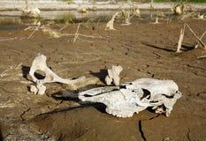 Huesos al lado de un waterhole Imágenes de archivo libres de regalías