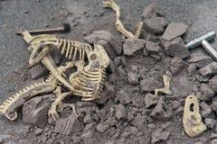 Huesos animales de excavación Fotos de archivo libres de regalías