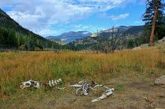 Huesos animales en naturaleza fotografía de archivo