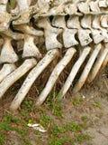 Huesos de la ballena y del cangrejo Fotografía de archivo libre de regalías